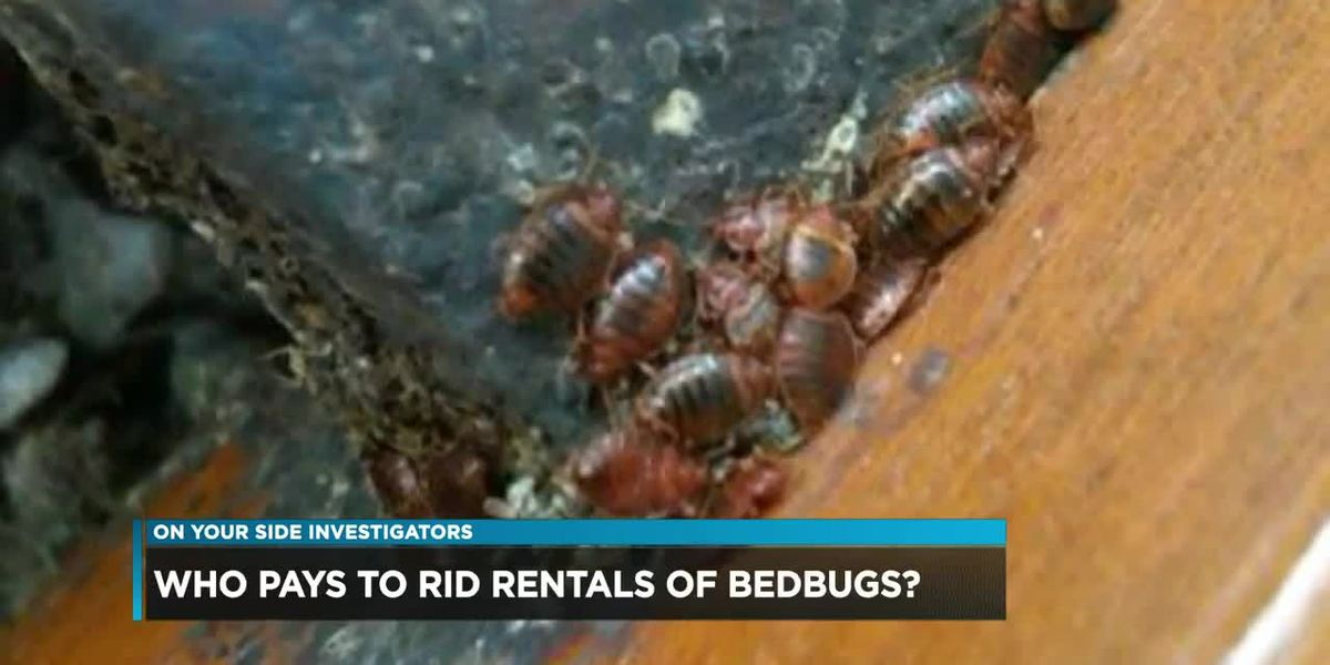 Who pays to rid rentals of bedbugs?