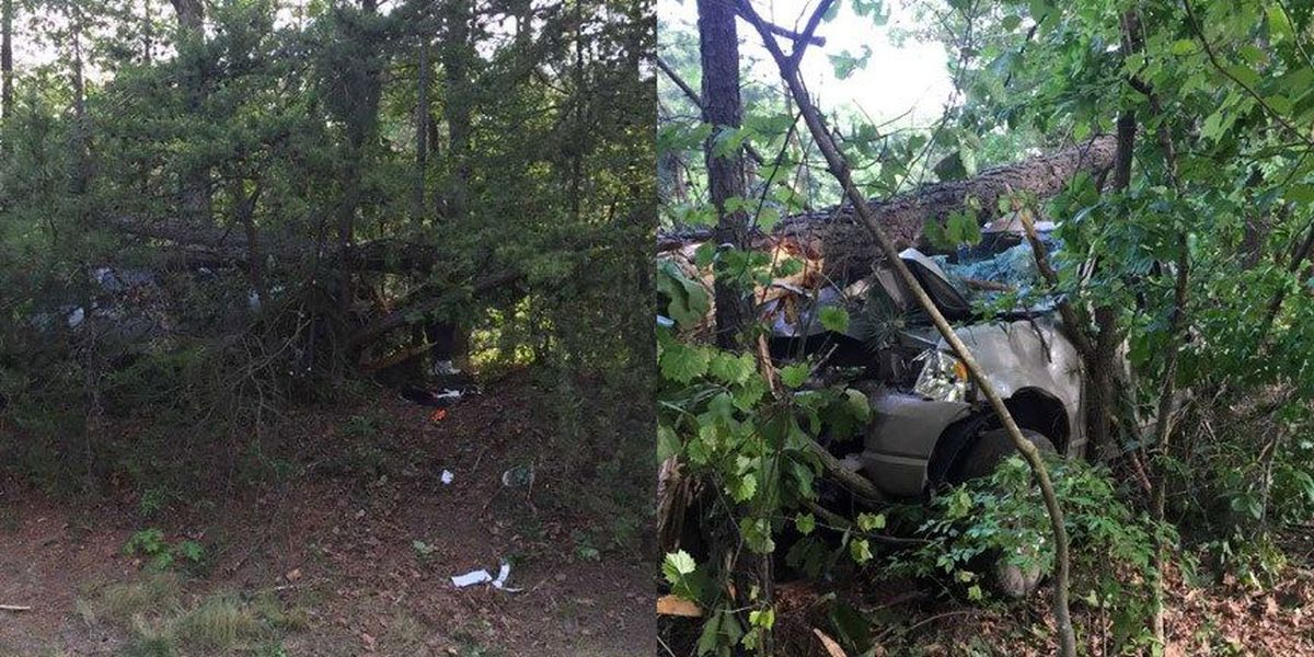 Man fighting for life after striking trees on I-95 in Hanover