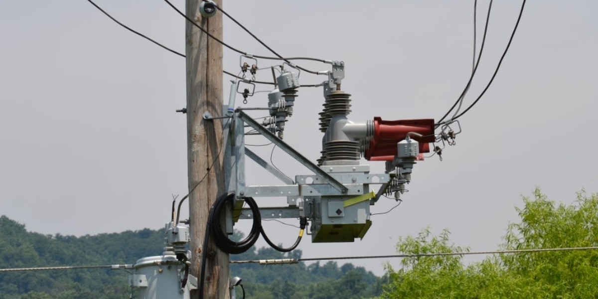 How your power company is combatting squirrel-related outages