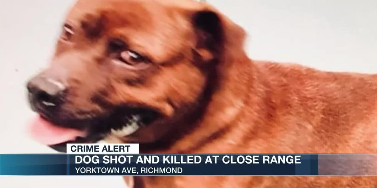 Dog shot and killed at close range