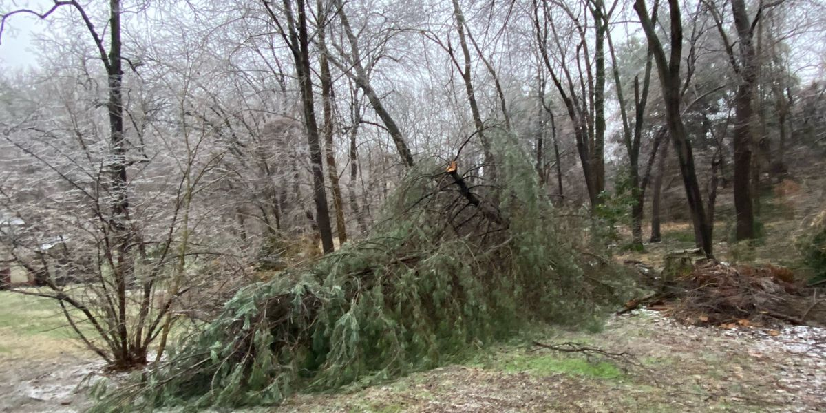 Chesterfield waiving fees for debris disposal amid storm cleanup