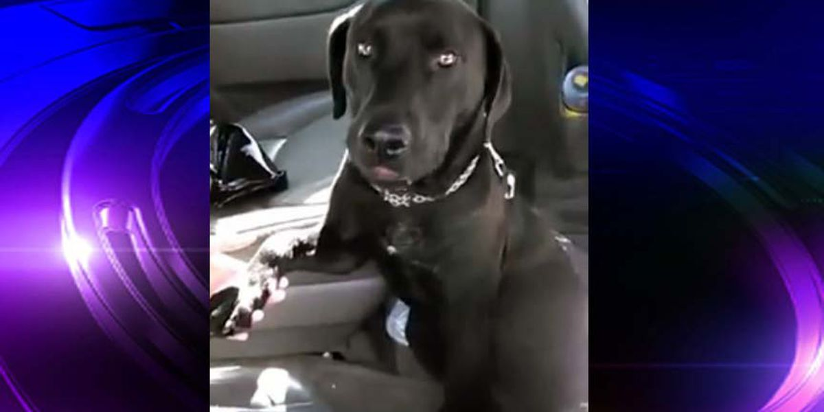 Lost Dog: Have you seen Athena?