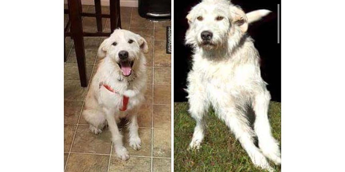 Lost Dog: Have you seen Jax?
