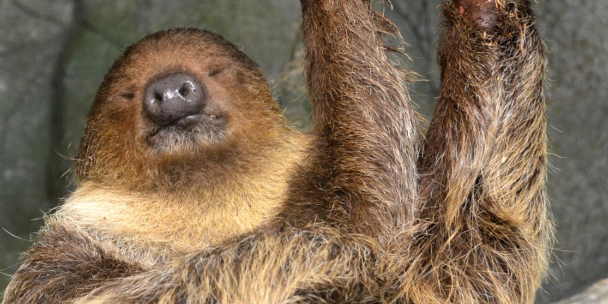 Metro Richmond Zoo opens new sloth exhibit, rain forest habitat