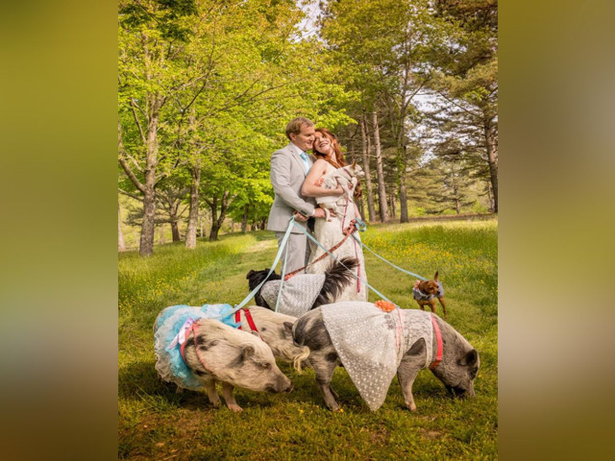 Virginia couple marries with bridal party of cows, pigs, dogs, chickens and a turkey