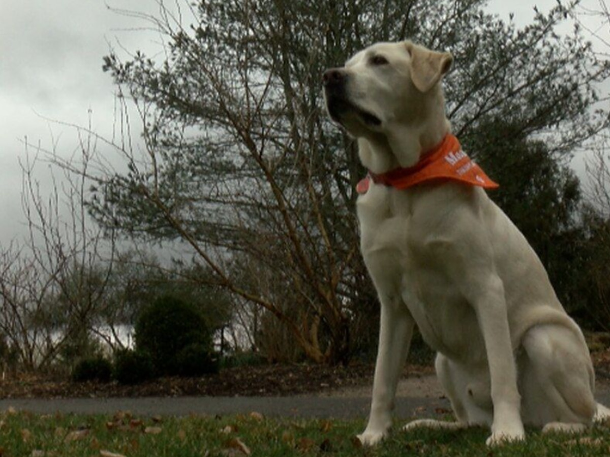 Virginia Tech therapy dog Moose dies of cancer