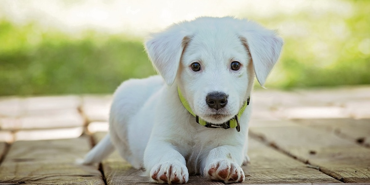 Adopting a dog? These are the 11 things you'll need
