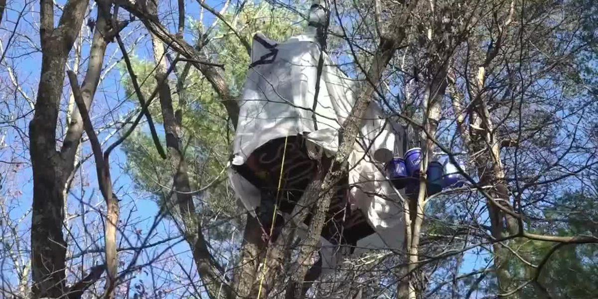 Tree sitters continue to block pipeline right-of-way, despite injunction ordering them to leave