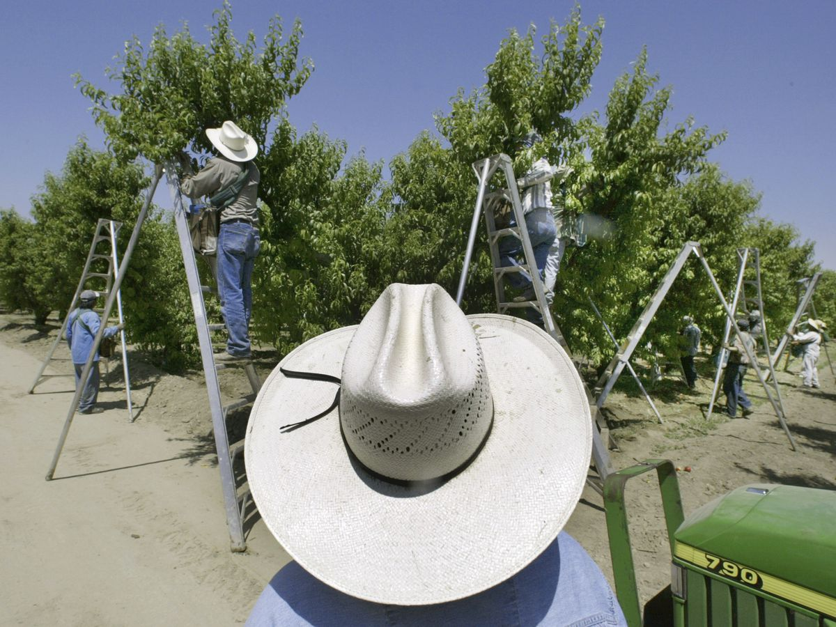 California recommends restrictions for popular pesticide