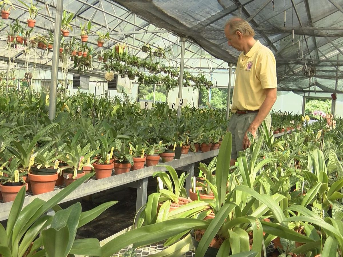 'People fight over orchids in their wills': Powhatan business brings orchids back to life