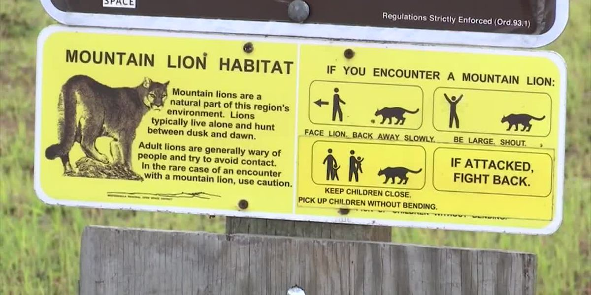 Crews search for mountain lion that bit 6-year-old girl at Calif. nature park