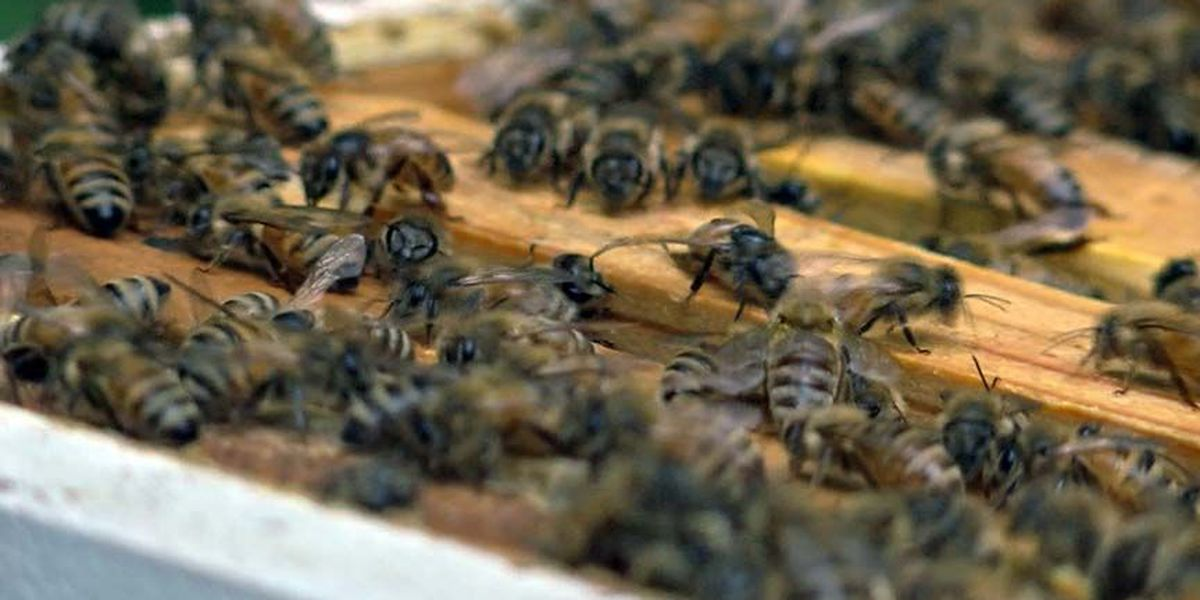 More Bang For Your Buck: Save the bees through free relocation