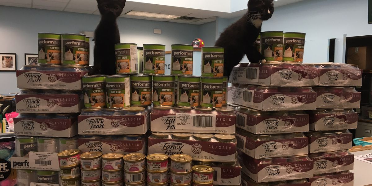 Feline feast: Anonymous donation helps feed RACC animals