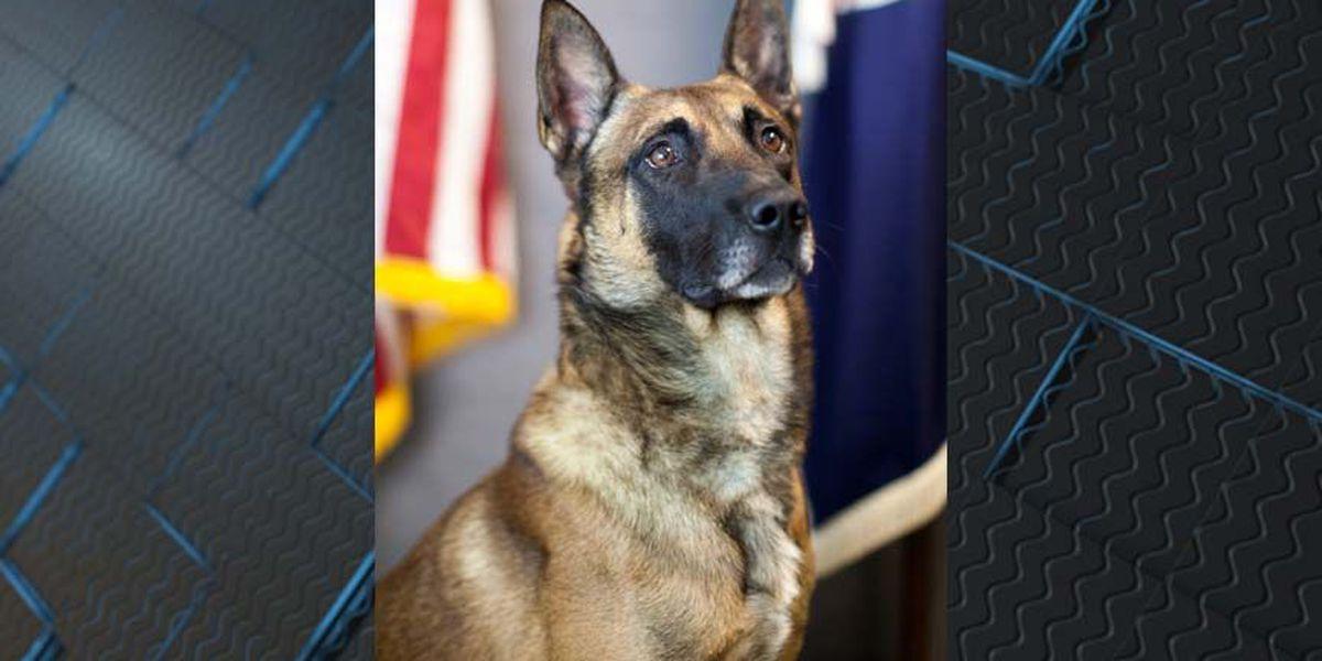 K-9 officer hailed as hero after apprehending armed suspect