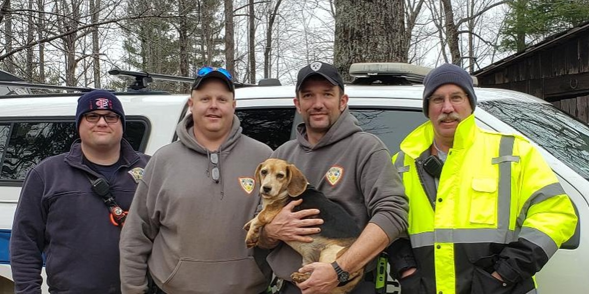 Crews rescue elderly beagle from underground wreckage
