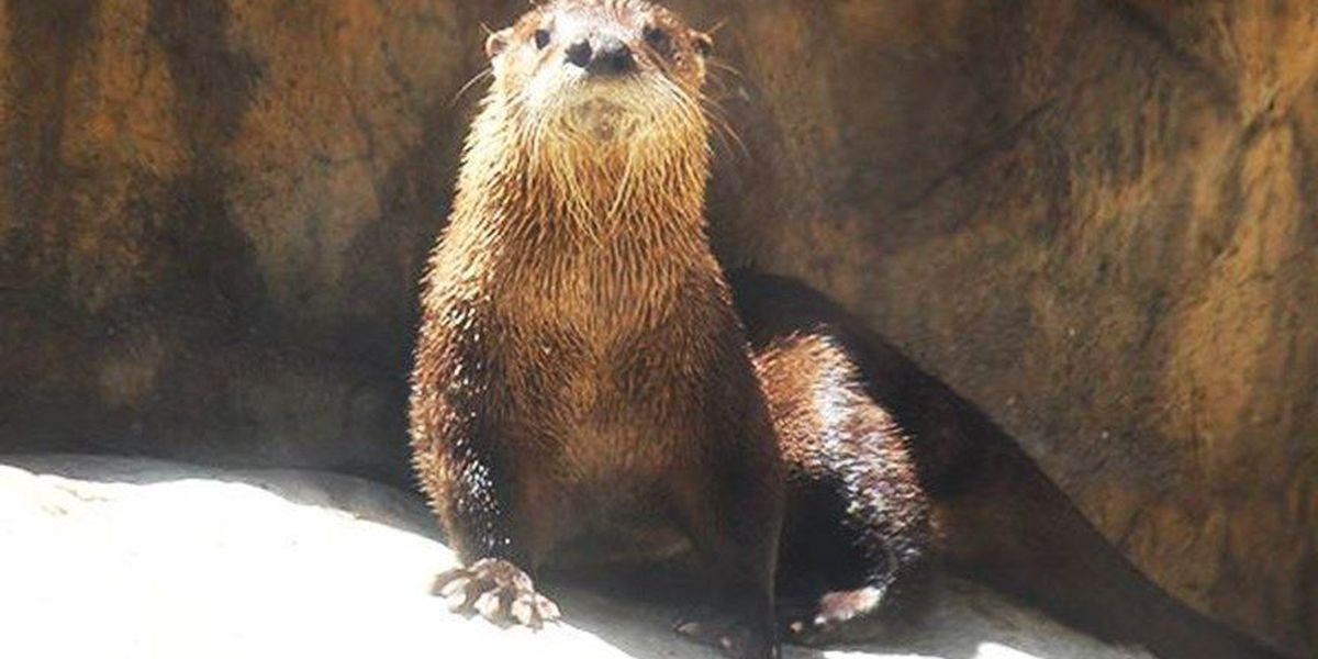 Maymont mourns loss of otter