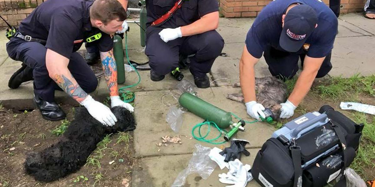 D.C. Fire crews resuscitate dog and cat pulled from burning building