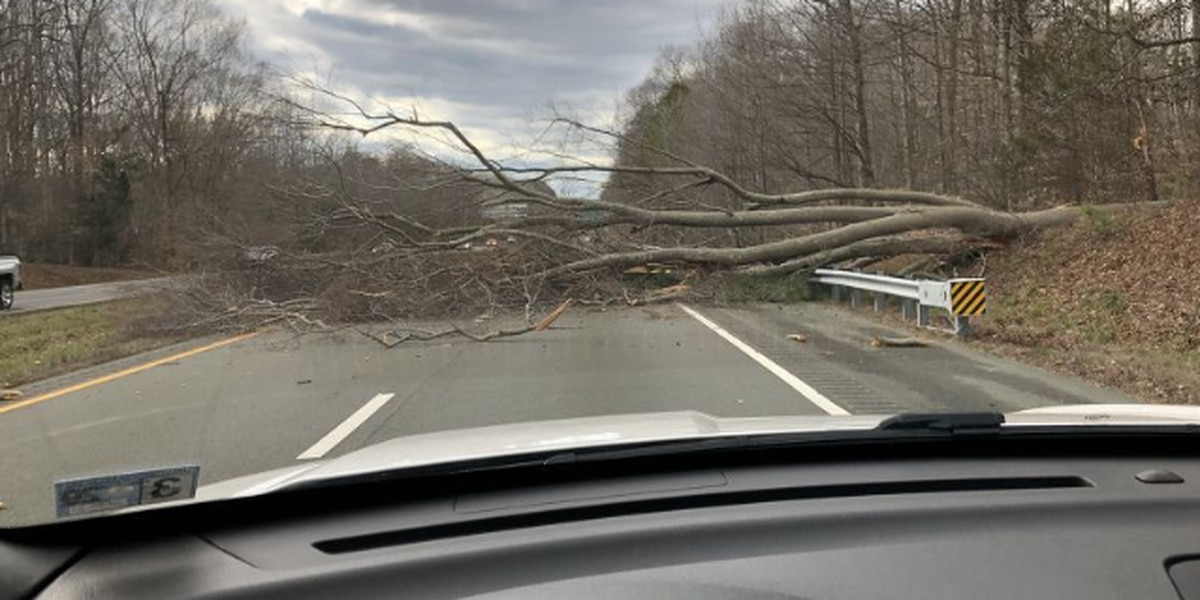 Tree down over Powhite Parkway causes backups