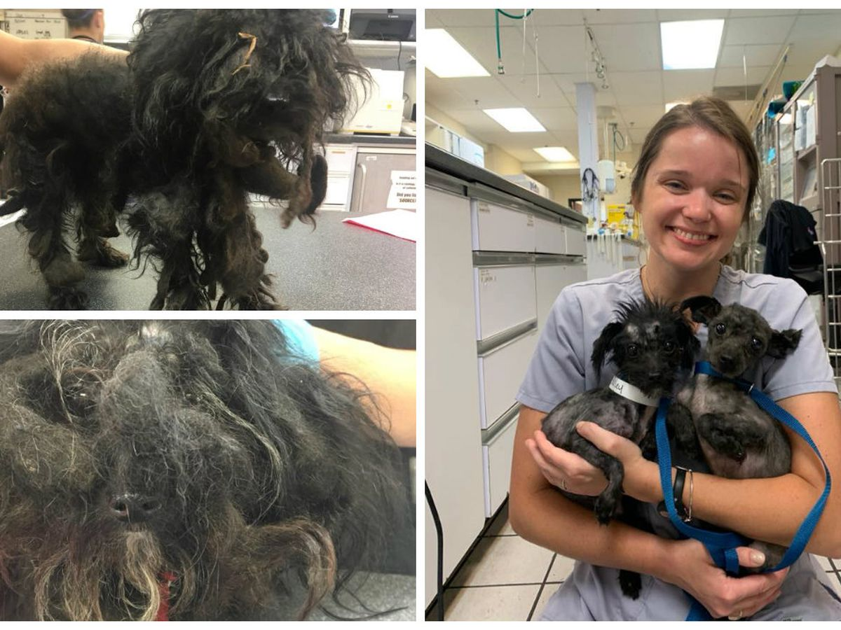 Transformation Tuesday: RACC treats dogs with overgrown fur