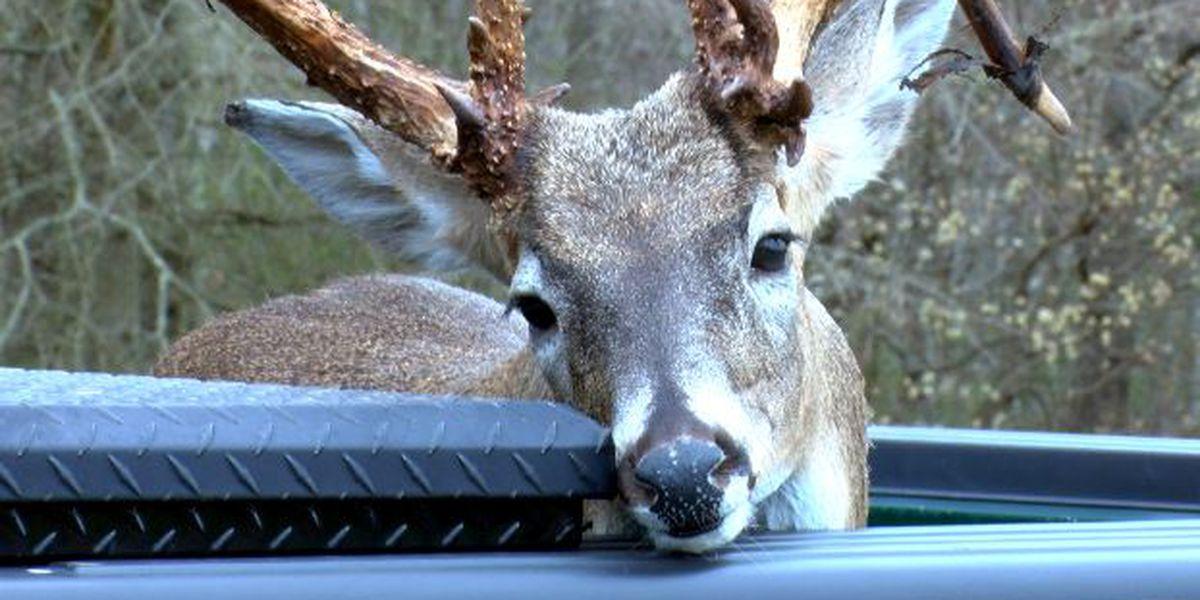 AL man illegally kills record-setting buck