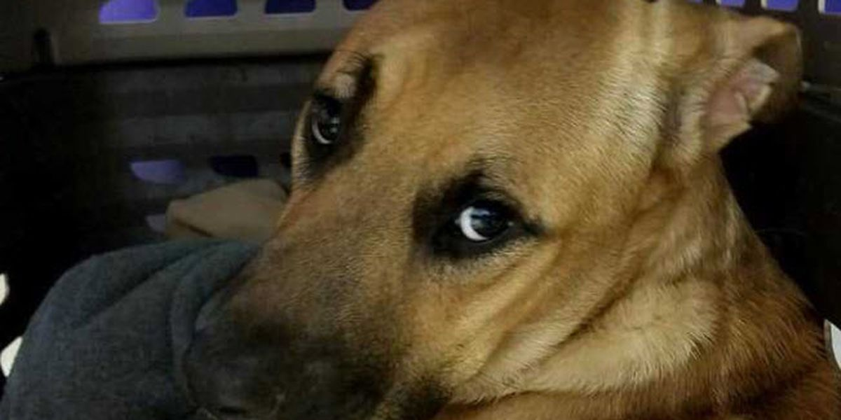 Dog left for dead in KY with his toys, a bag of food