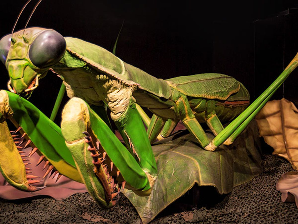 Science Museum's Giant Insects exhibit giveaway: This contest has ended