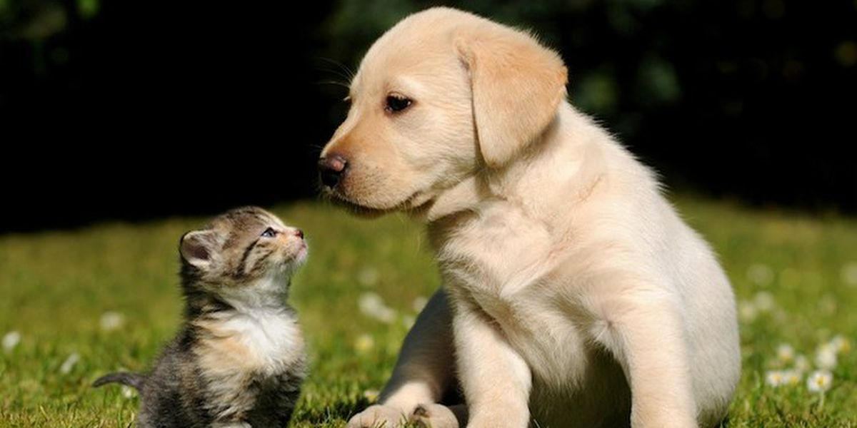 Hanover County providing rabies vaccines Saturday