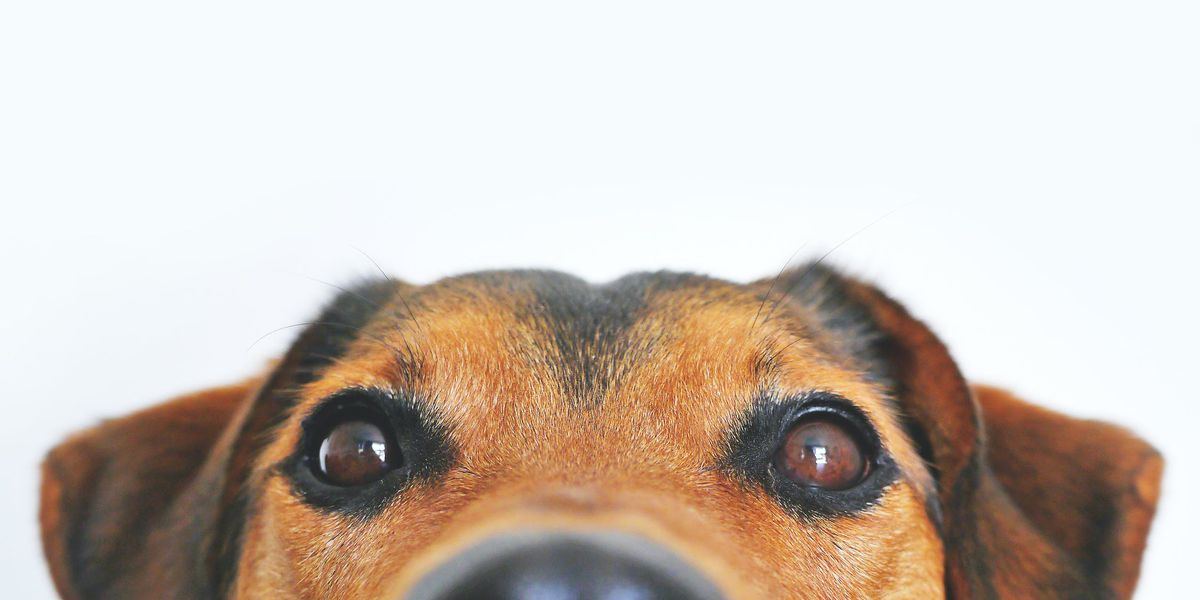 Tips for dog owners ahead of Easter weekend