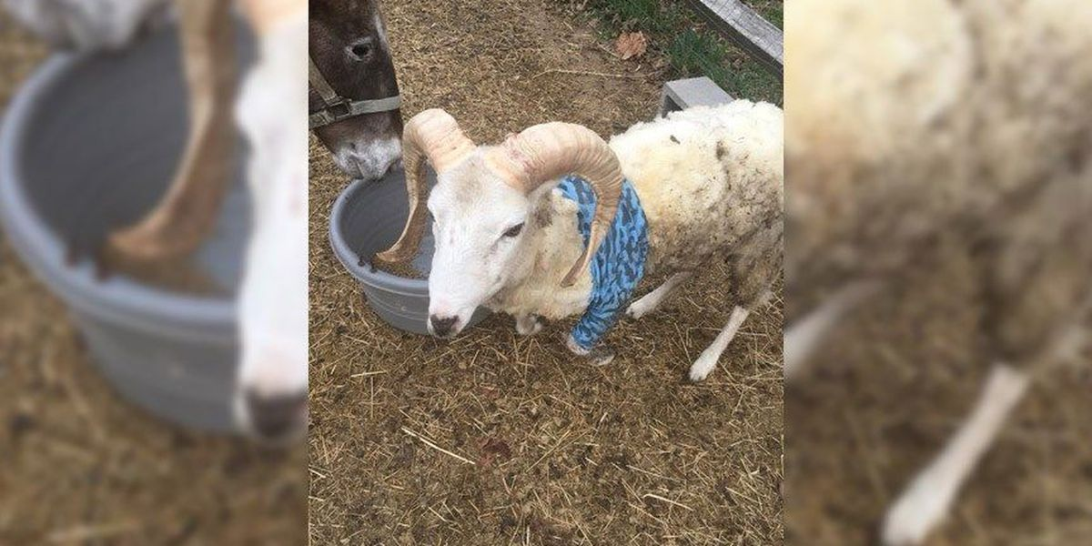 Dinwiddie farm warns dog owners to properly manage pets following attack
