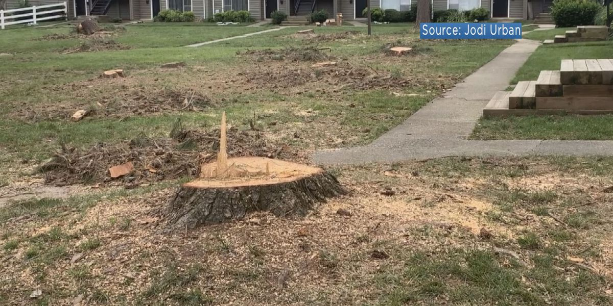 Resident upset over dozens of removed trees at South Richmond apartment complex