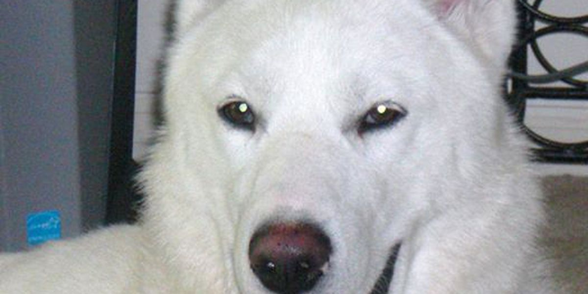 Lost Dog: Have you seen Marley?