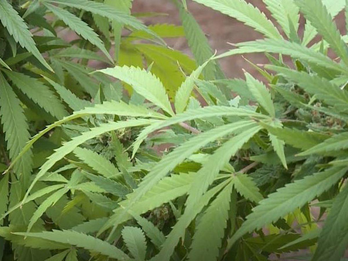 Virginia prosecuted 46,000+ marijuana cases in 2018