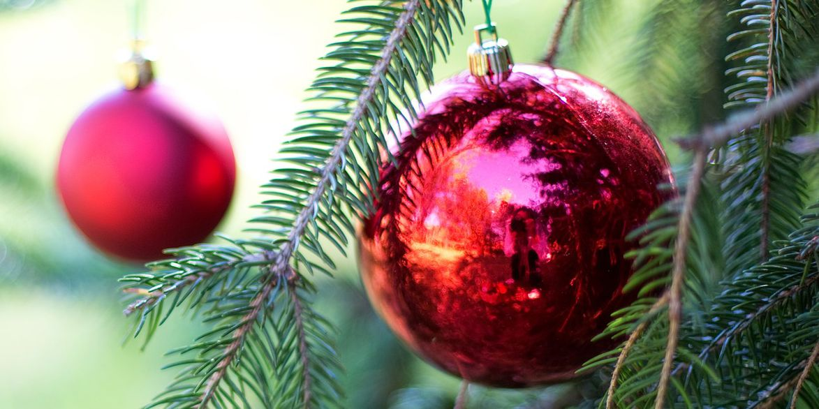 When and where can you recycle your Christmas trees?