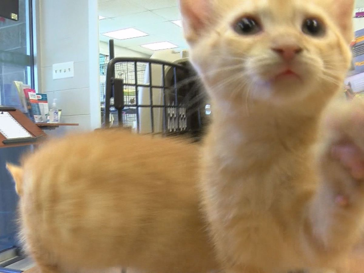 Shelters and animal organizations report an increase in adoption requests
