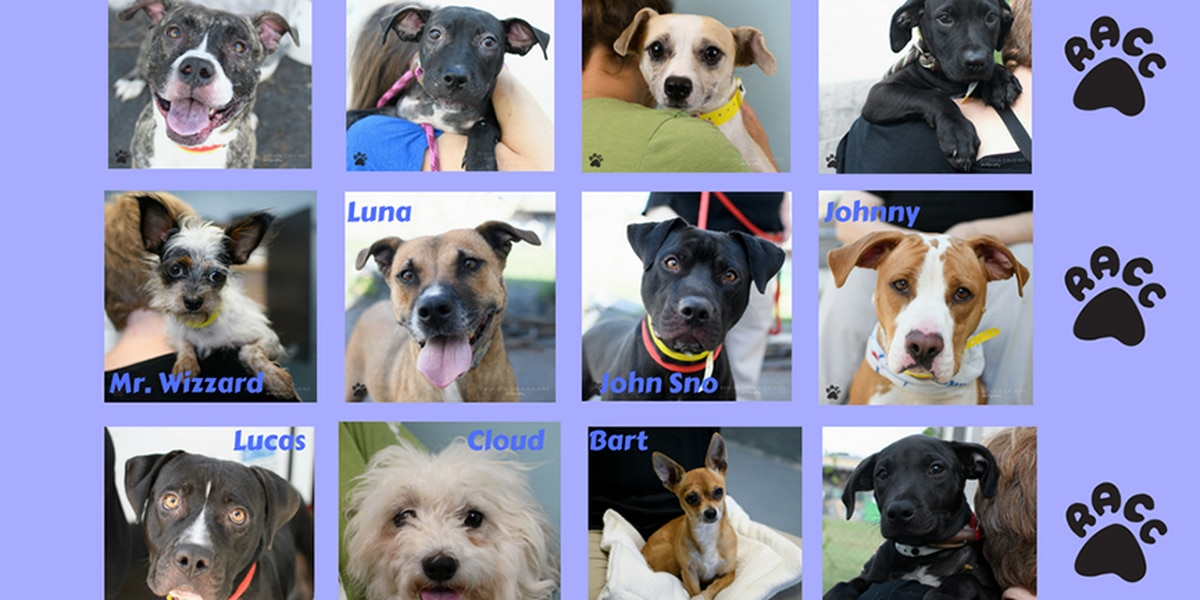 'Sunshine Dozen' dogs available for adoption at RACC on Saturday