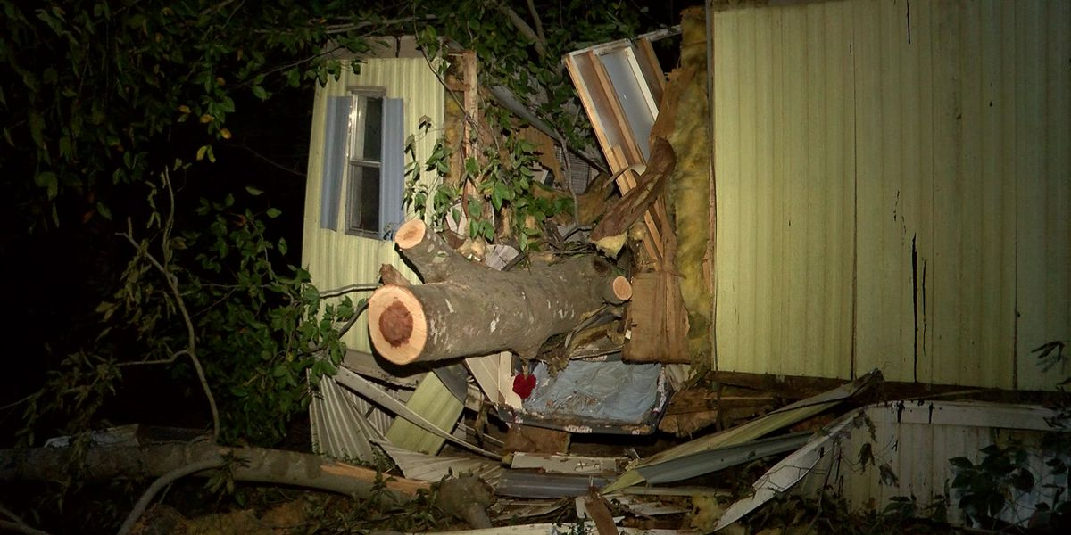 Tree falls on house, landing where toddler was moments before