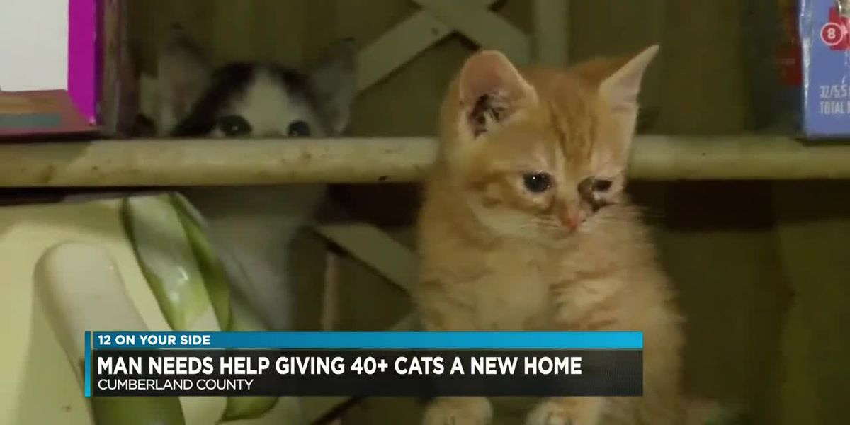 Man needs help giving more than 40 cats a new home