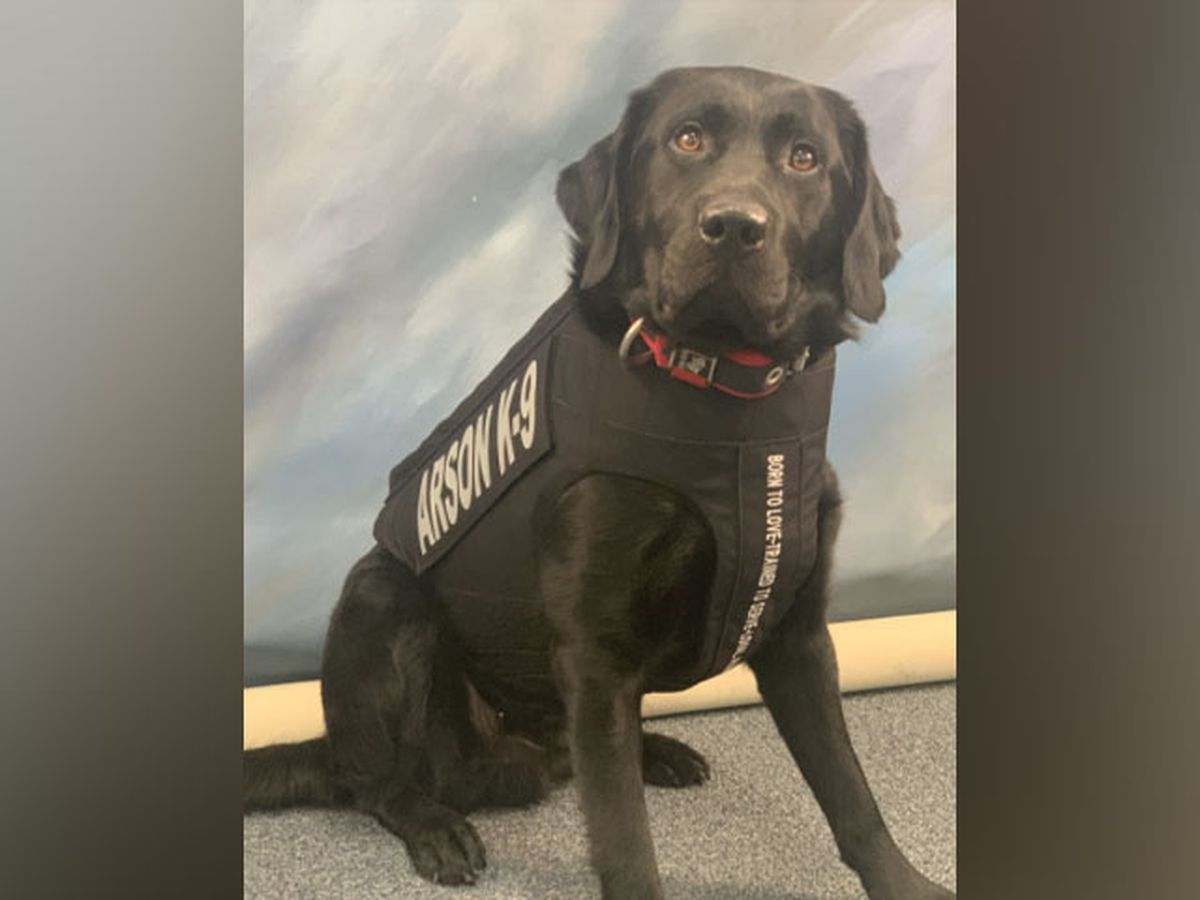 Richmond Fire Department's Arson K-9 receives body armor donation
