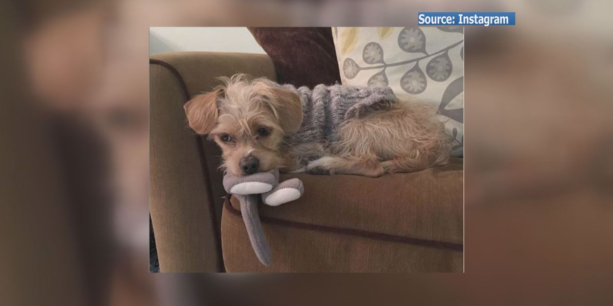 Richmond woman says her dog was killed by coyote
