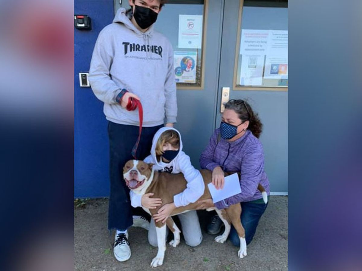 Pitbull from RACC adopted after running away 16 times
