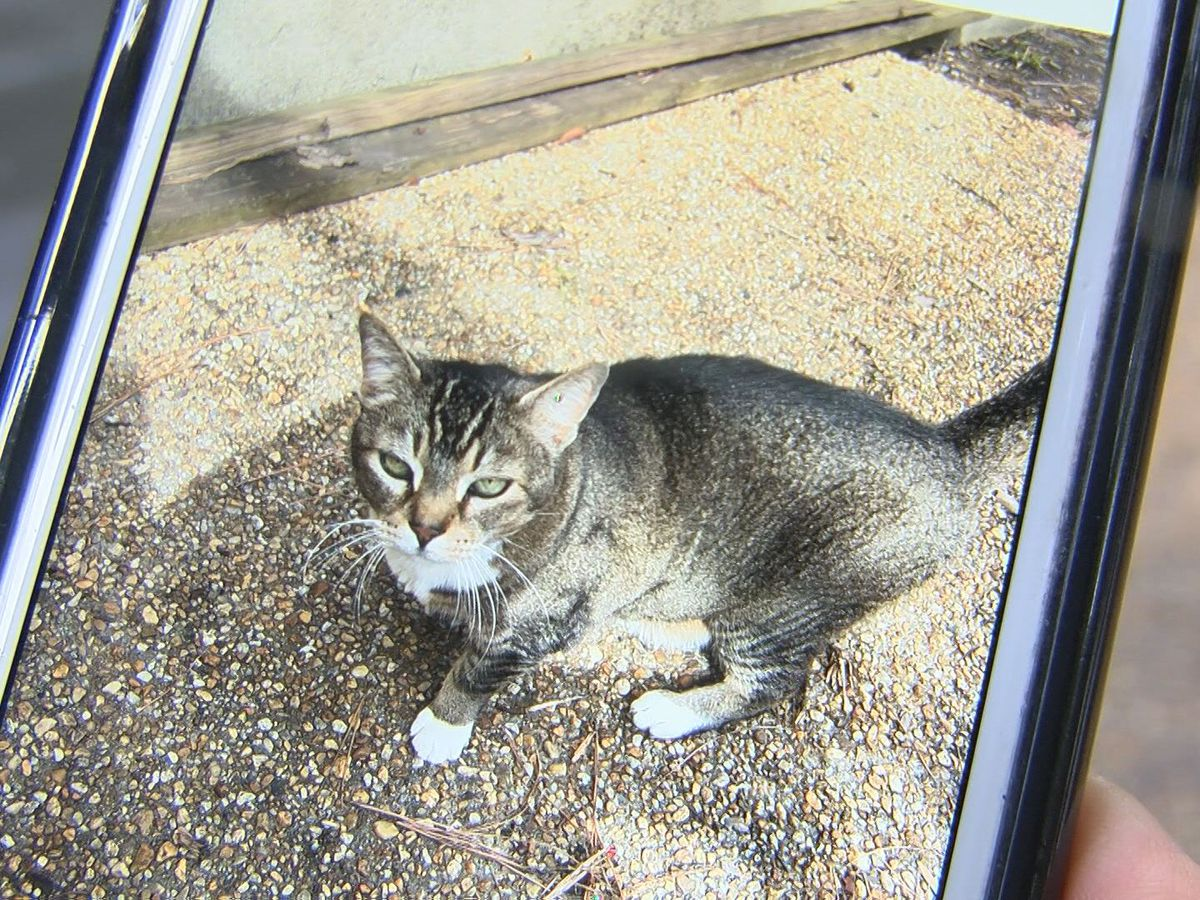 Neighbors concerned over dozens of missing cats