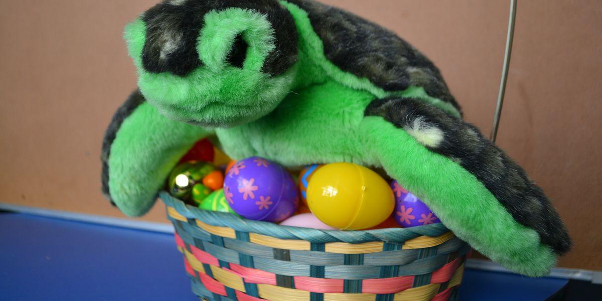 Aquarium hosts annual Sea Turtle Egg Hunt