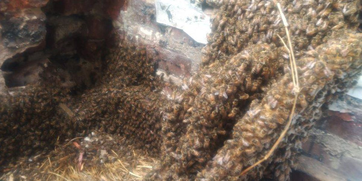 Workers uncover 40-year-old beehive at Richmond elementary school