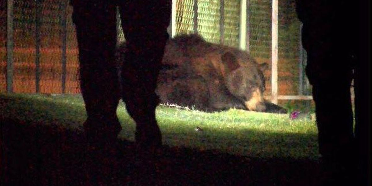 Black bear wandering Richmond's Mosby Court released in the wild
