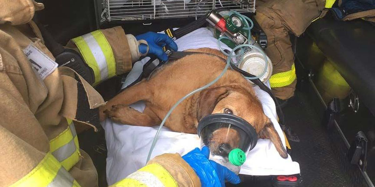 Chesterfield Fire crews rescue several animals from house fire; 1 cat dies