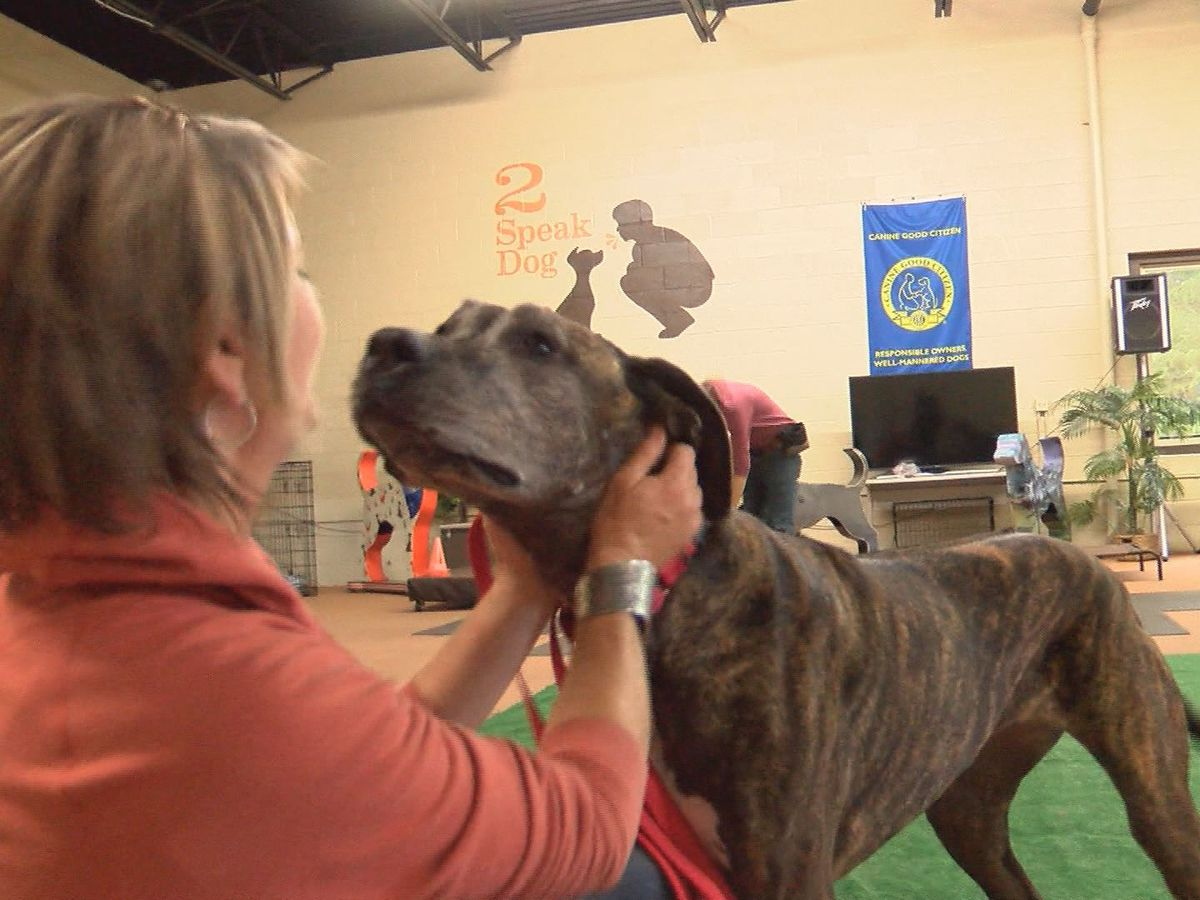 Henrico dog trainer speaks the language of man's best friend