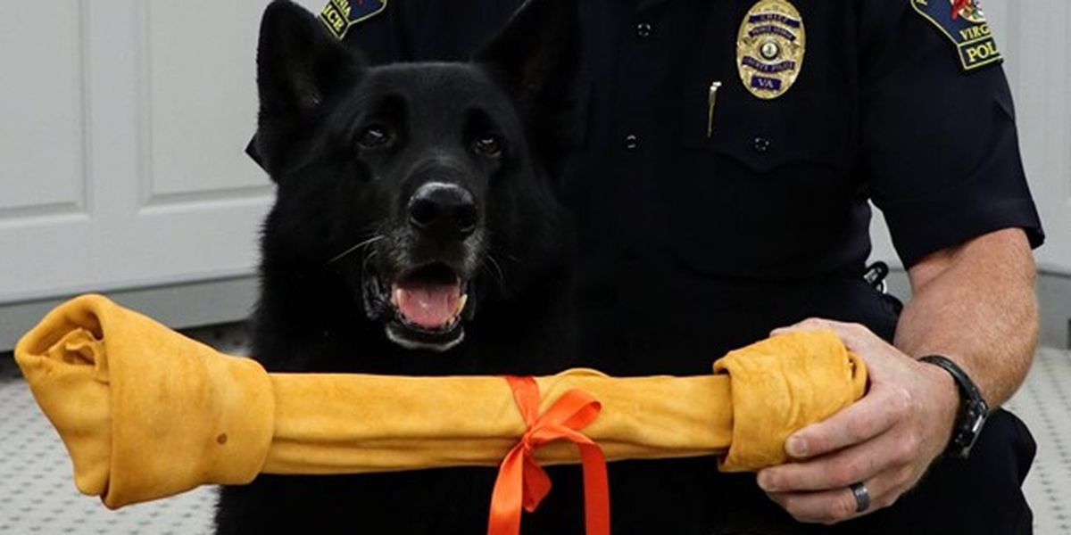Police therapy K-9 retiring, handing job over to daughter