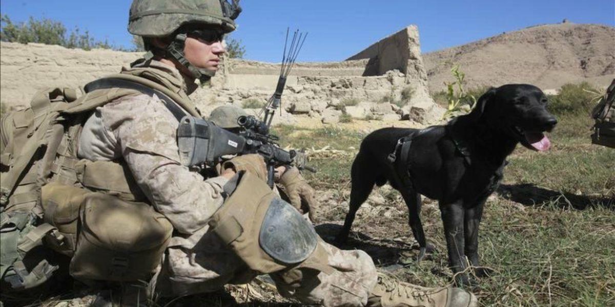 Marine veteran seeking military honors for bomb-detection dog