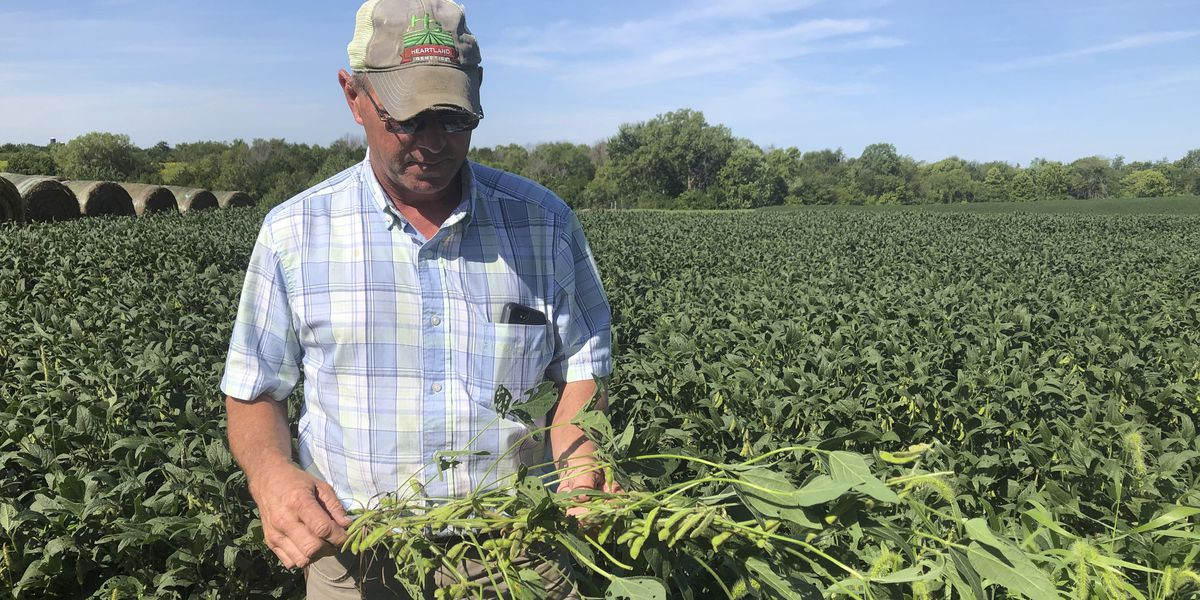 Farmers' loyalty to Trump tested over new corn-ethanol rules