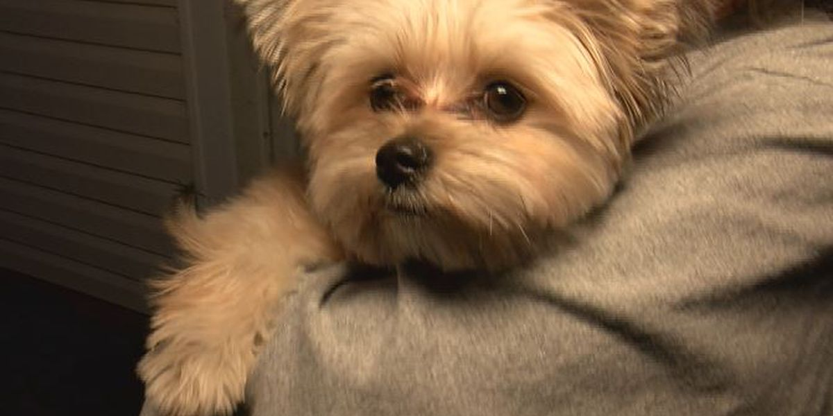 Dog sucked out of home in tornado, returns hours later